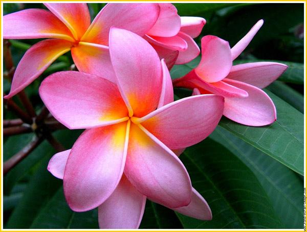 fleur1_0